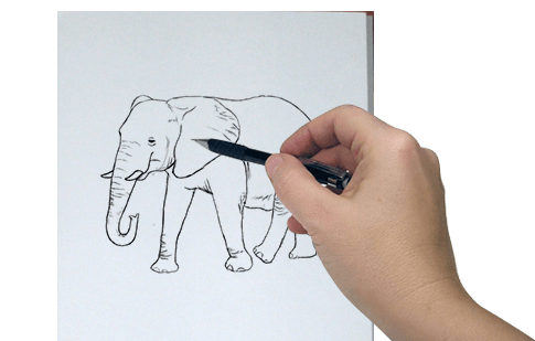 How To Draw Step By Step Pictures For Kids