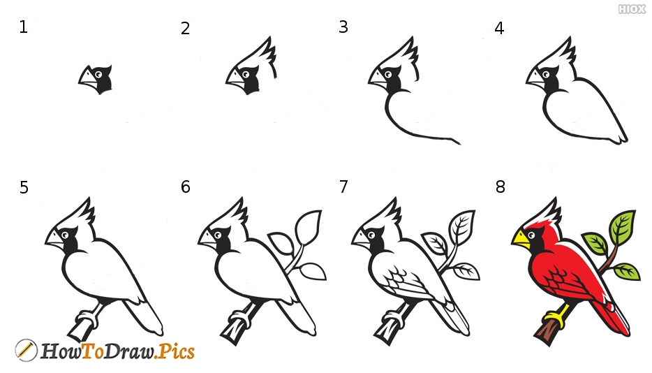 How To Draw Bird On Branch Step by Step Pictures