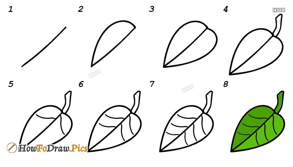 How To Draw Mango Pictures Mango Step By Step Drawing Lessons