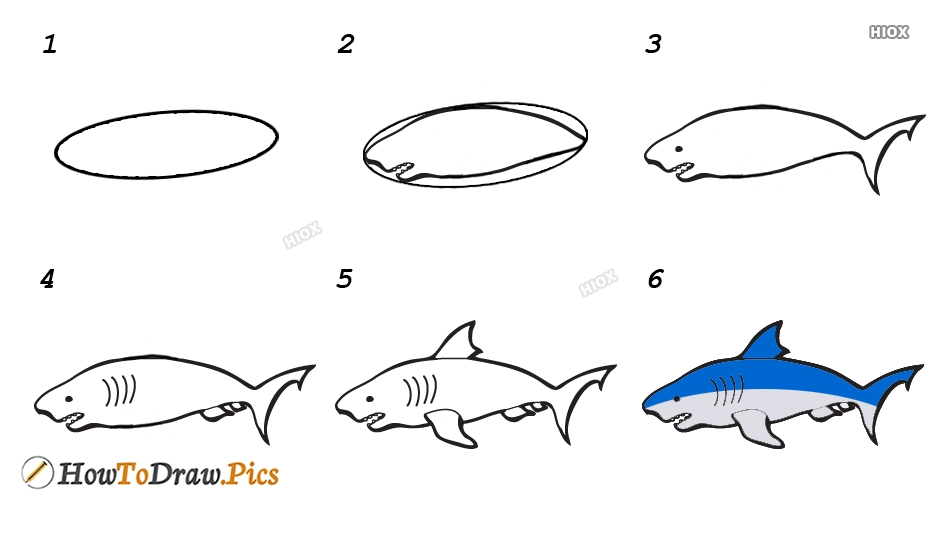 How To Draw Shark Step By Step Images