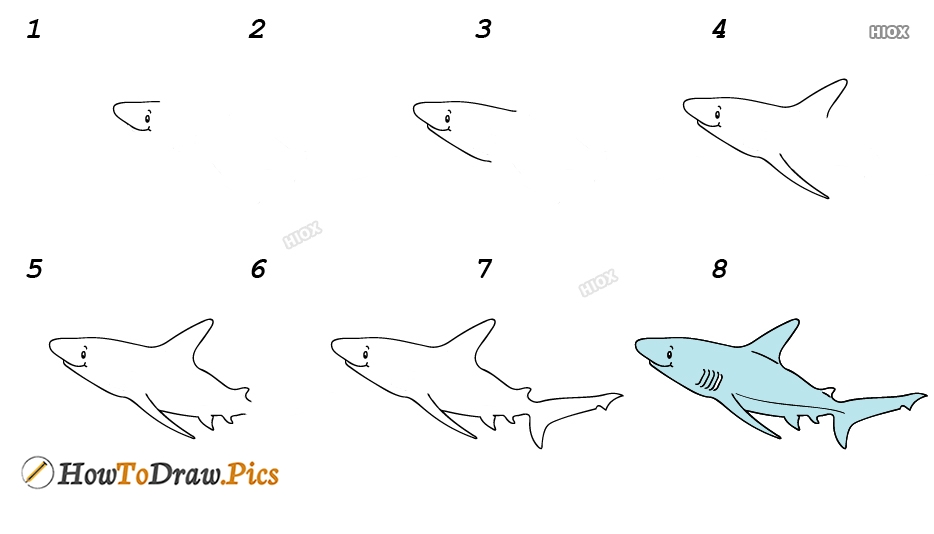 How To Draw Fish Step by Step Pictures