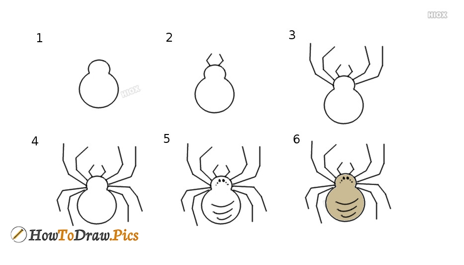How To Draw Spider Step by Step Pictures