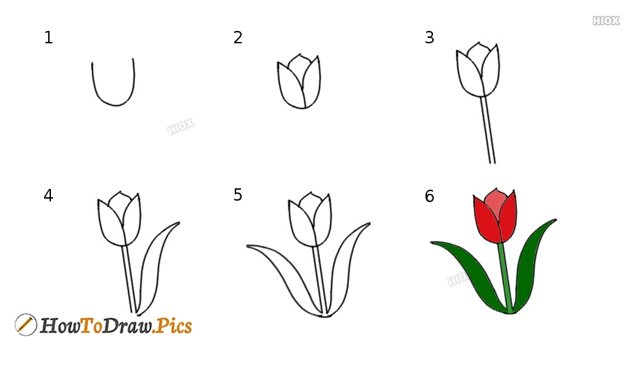 how to draw a tulip howtodraw pics