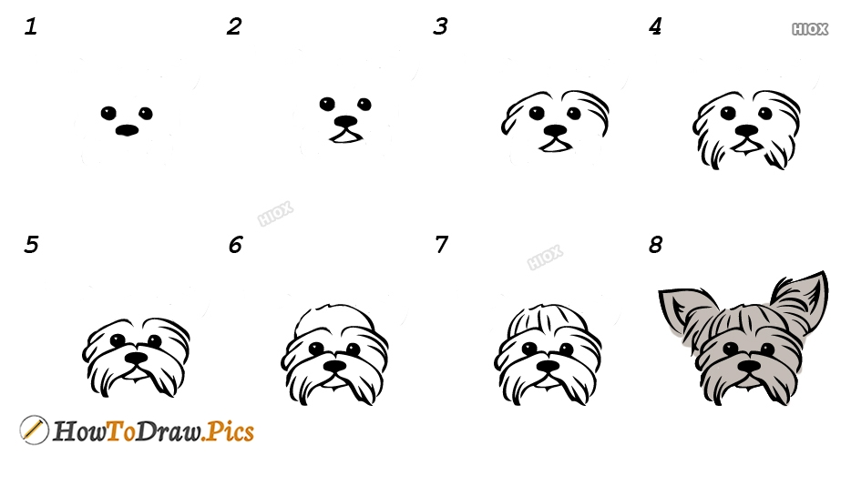 How To Draw Yorkshire Terrier Step by Step Pictures