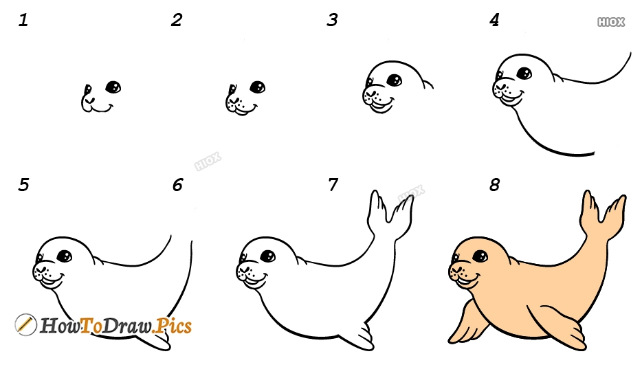 How To Draw Elephant Seal Step by Step Pictures