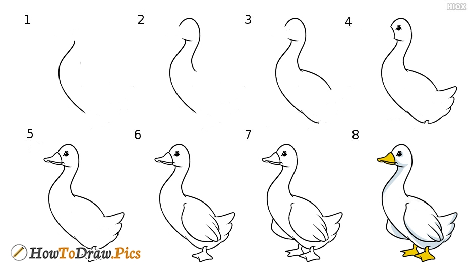How To Draw Cartoon Birds Step By Step Images