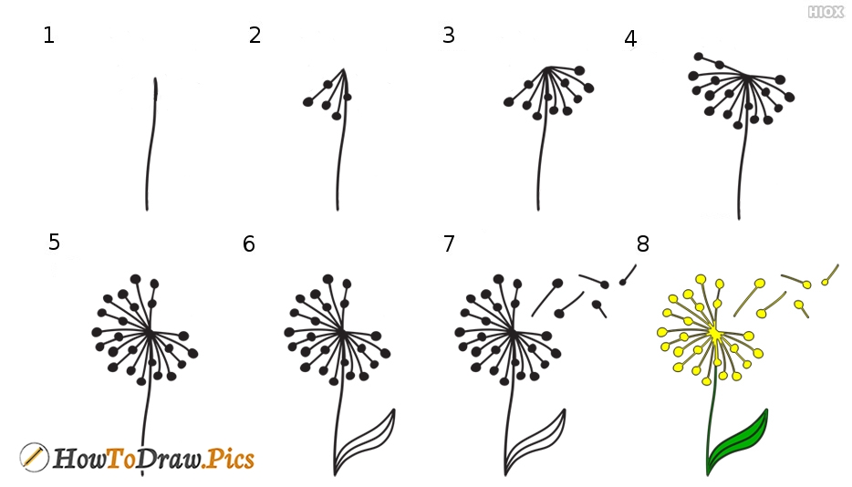 How To Draw Dandelion Step by Step Pictures