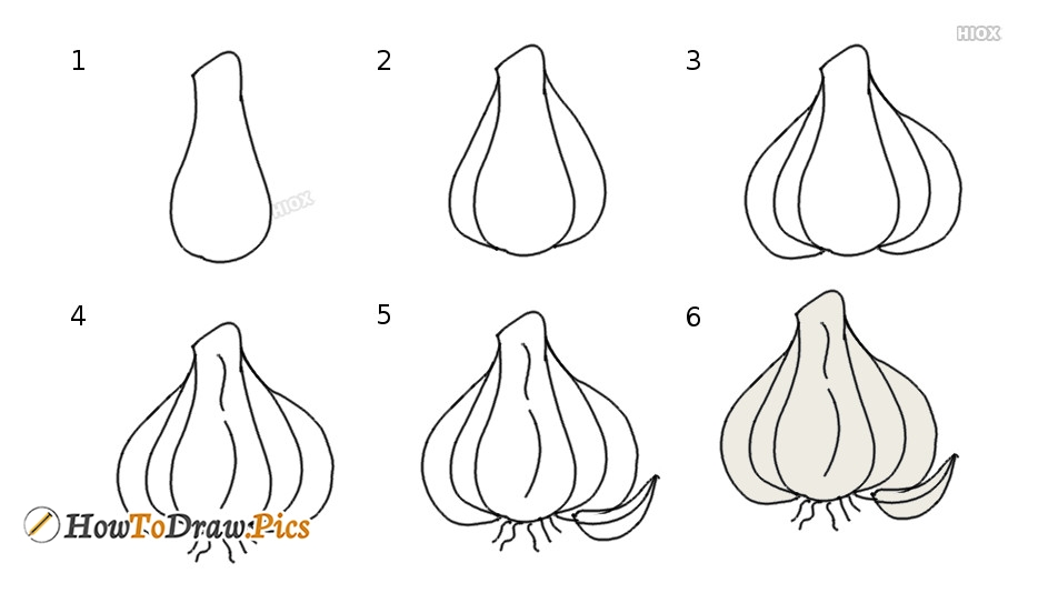 How To Draw A Garlic Step By Step