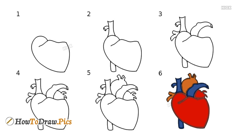 How To Draw Human Heart Howtodraw Pics