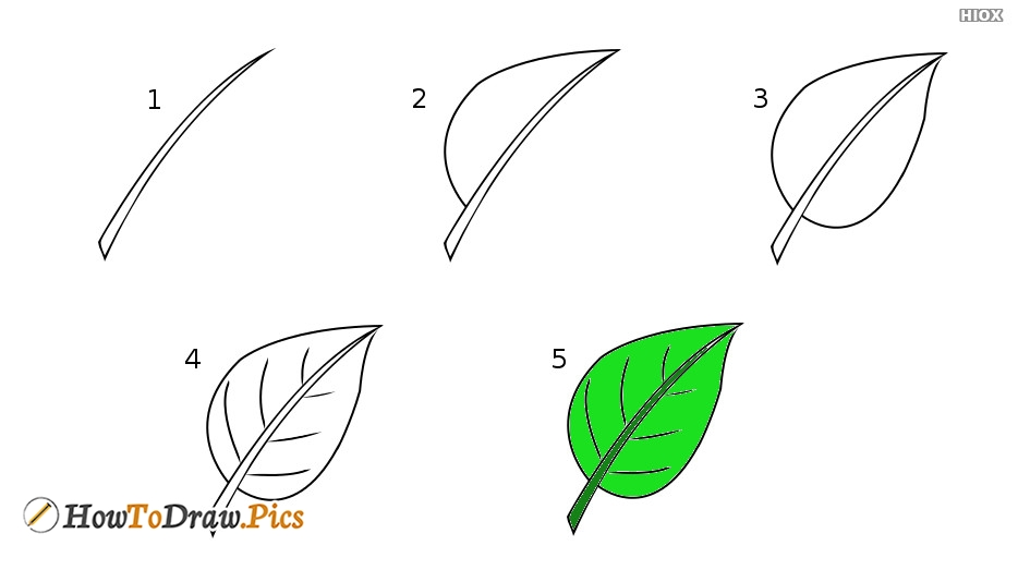 How To Draw Leaves Pictures | Leaves Step by Step Drawing Lessons