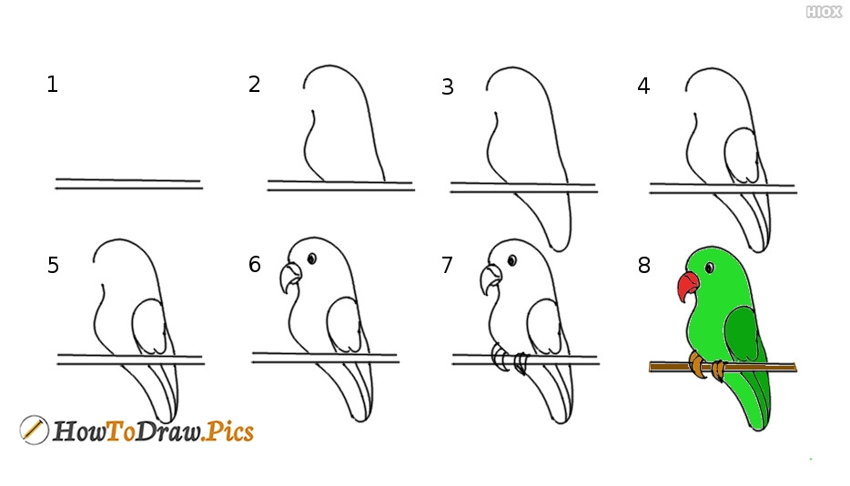 How To Draw Parrot Step by Step Pictures