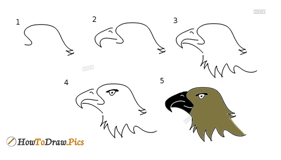 How To Draw An Eagle Step By Step Pictures