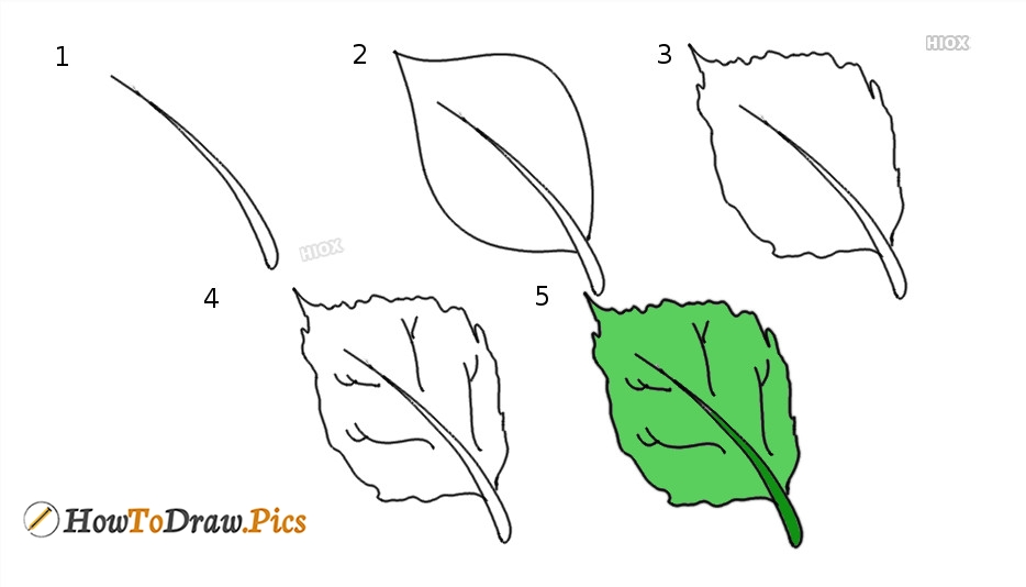 How To Draw A Realistic Leaf | Step By Step Easy Drawing