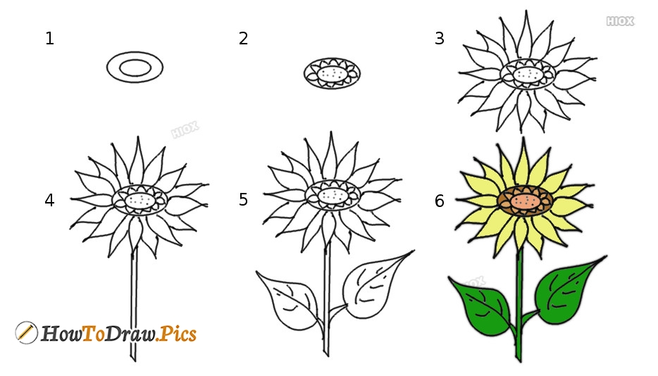 How To Draw Flower Step by Step Pictures
