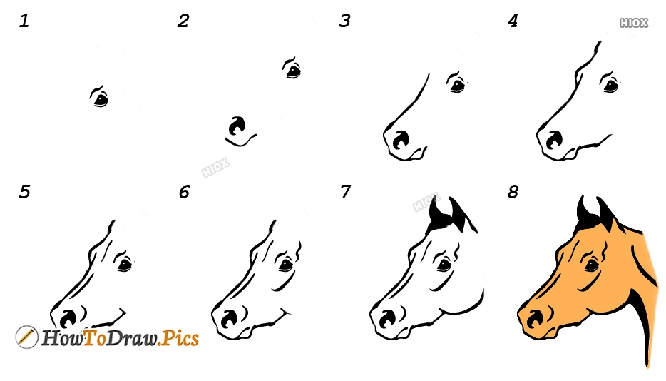 Steps For How To Draw A Horse