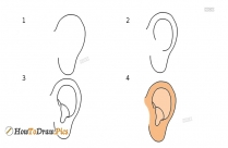 How To Draw An Ear in Step by Step