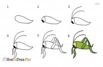 How To Draw A Grasshopper