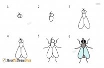 How To Draw A Insect