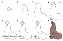 How To Draw An Elephant Seal