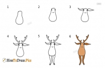 How To Draw Deer