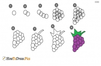 How To Draw Grapes Step By Step?
