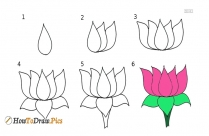 How To Draw Jasmine Flower