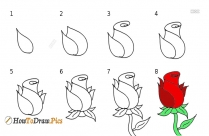 Rose Step by Step Drawing Lessons
