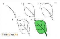 How To Draw Sunflower Leaf