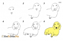 Steps For How To Draw A Dog